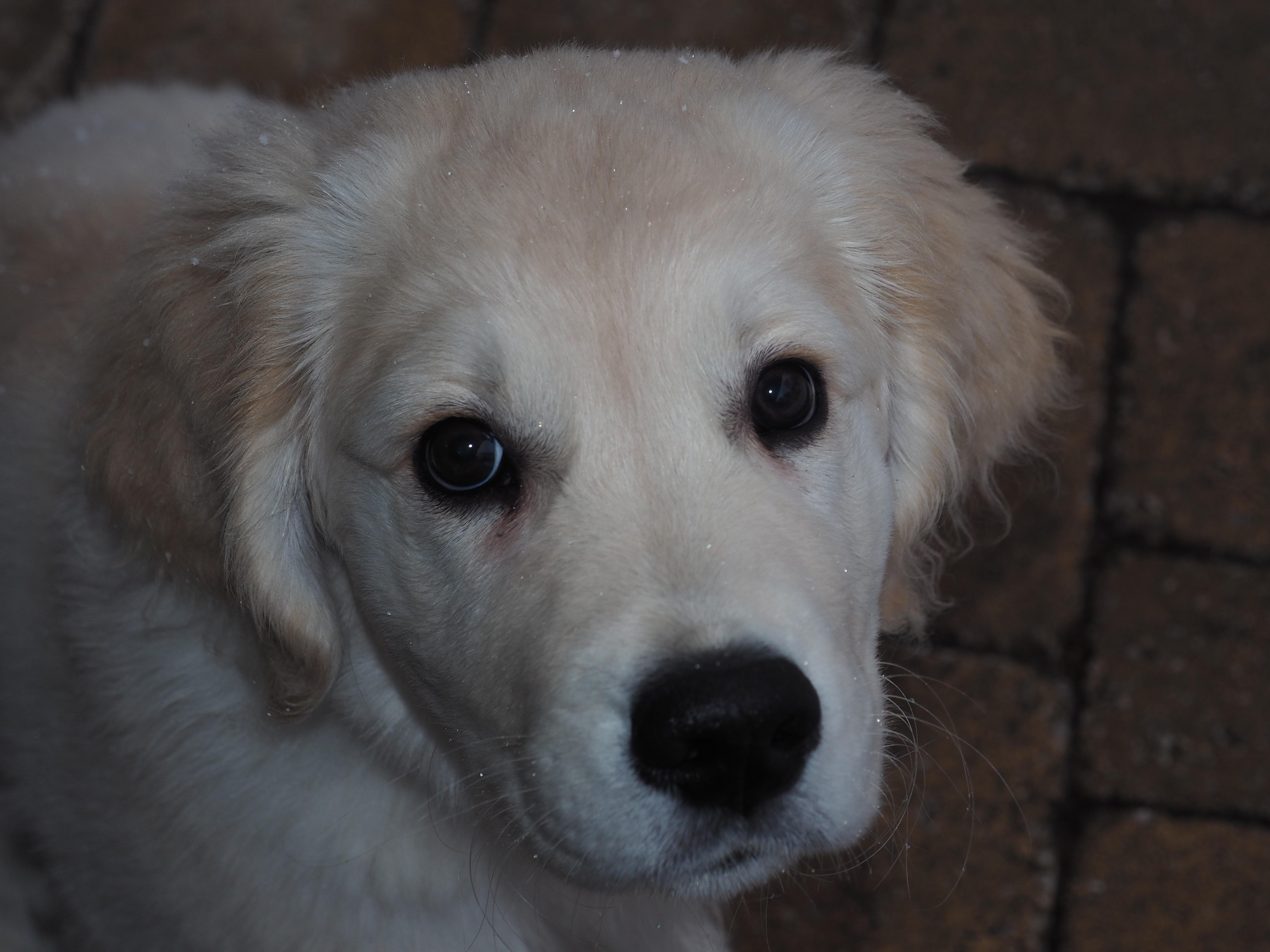 De perfectionist en…. puppyliefde